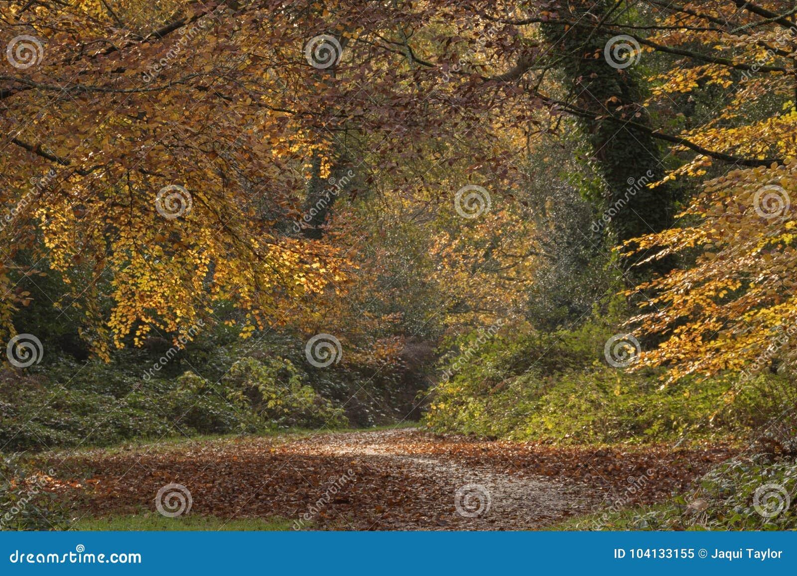 Autumn trees on Southampton Common