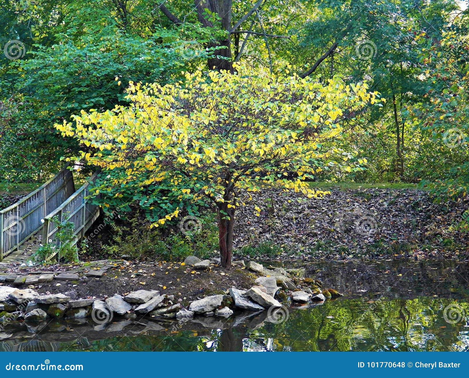 Changing Seasons stock photo. Image of yellow, season - 101770648