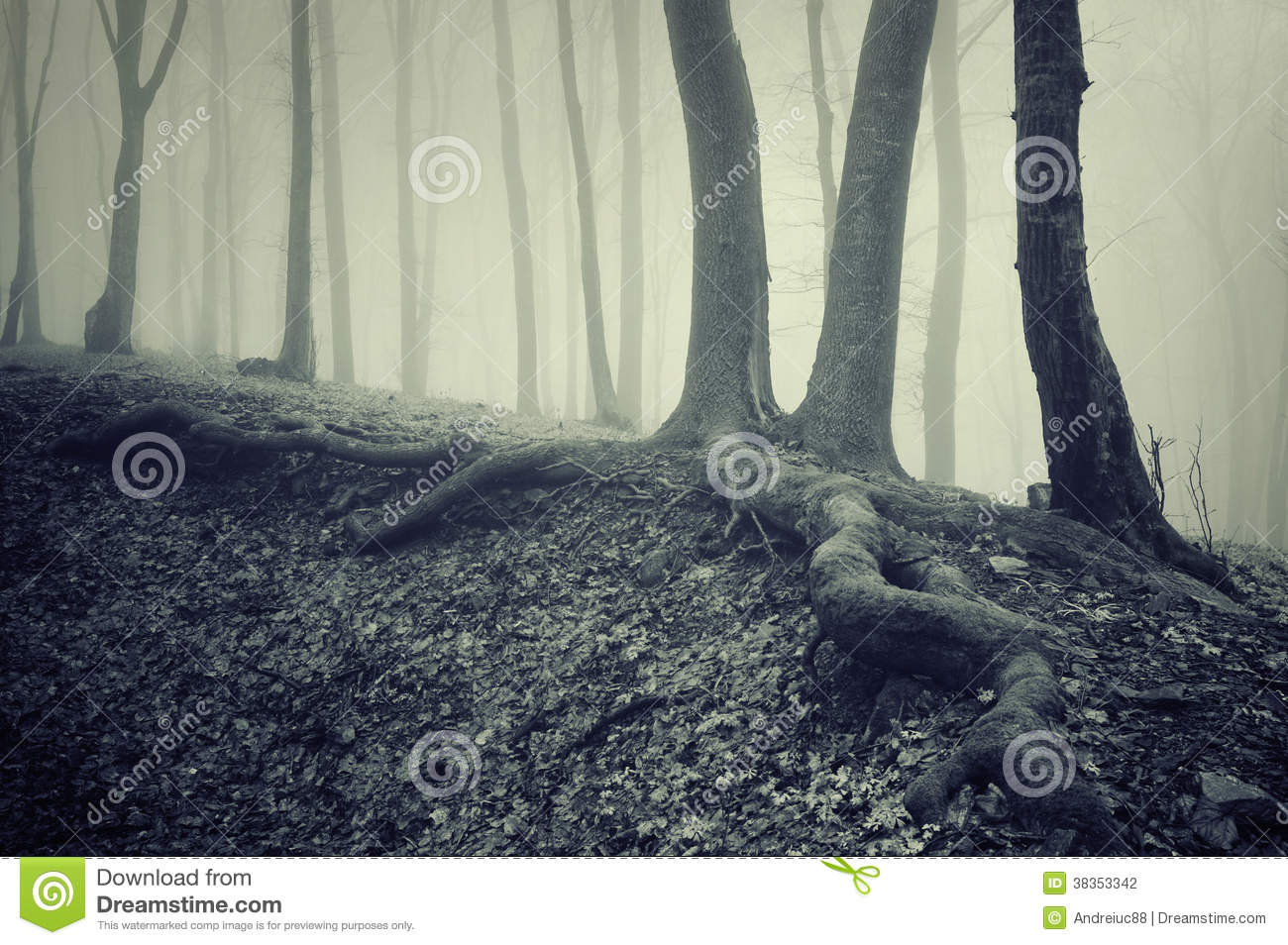 Trees With Big Roots In A Dark Creepy Mysterious Forest