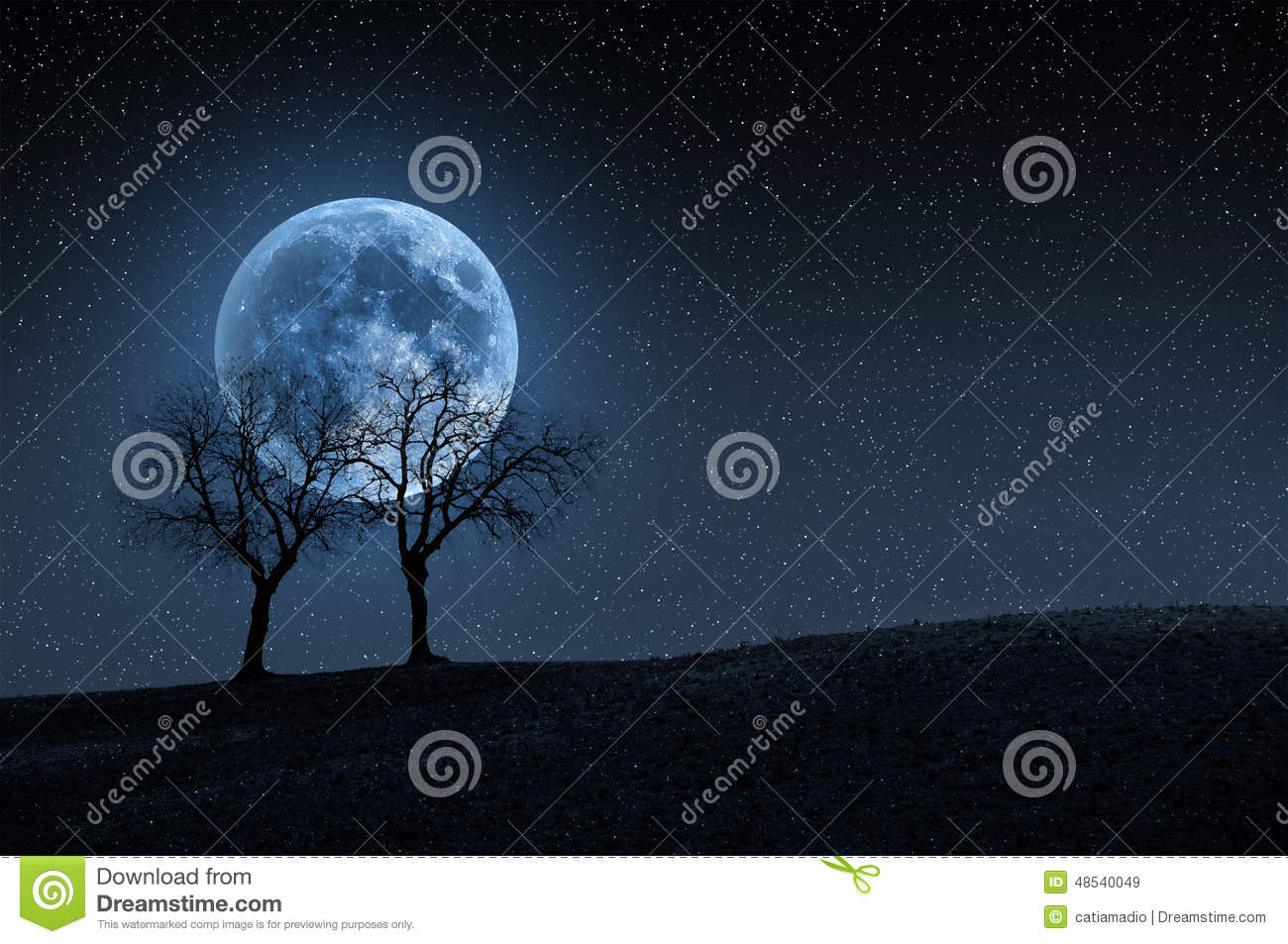 Trees In Blue Moon Stock Photo