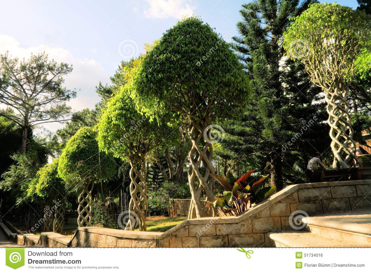 Trees with branches intertwined as helix in garden