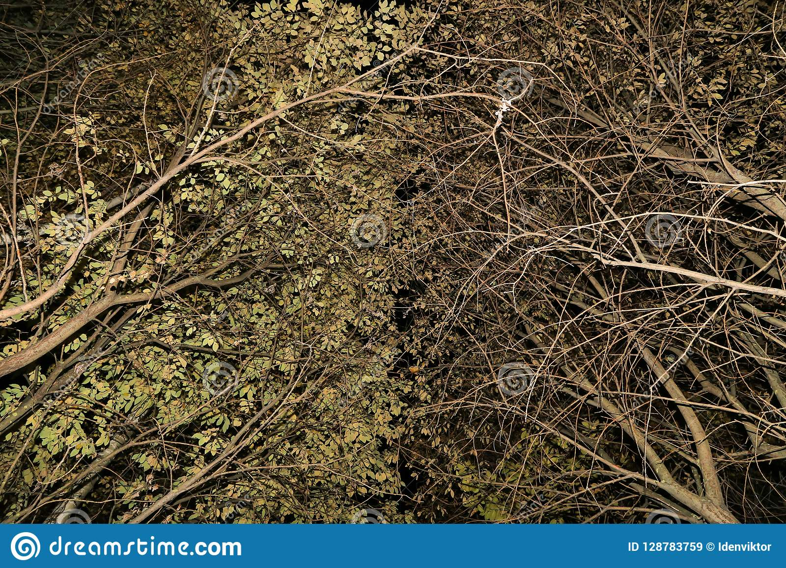Trees Branches, leaves nature abstract background texture
