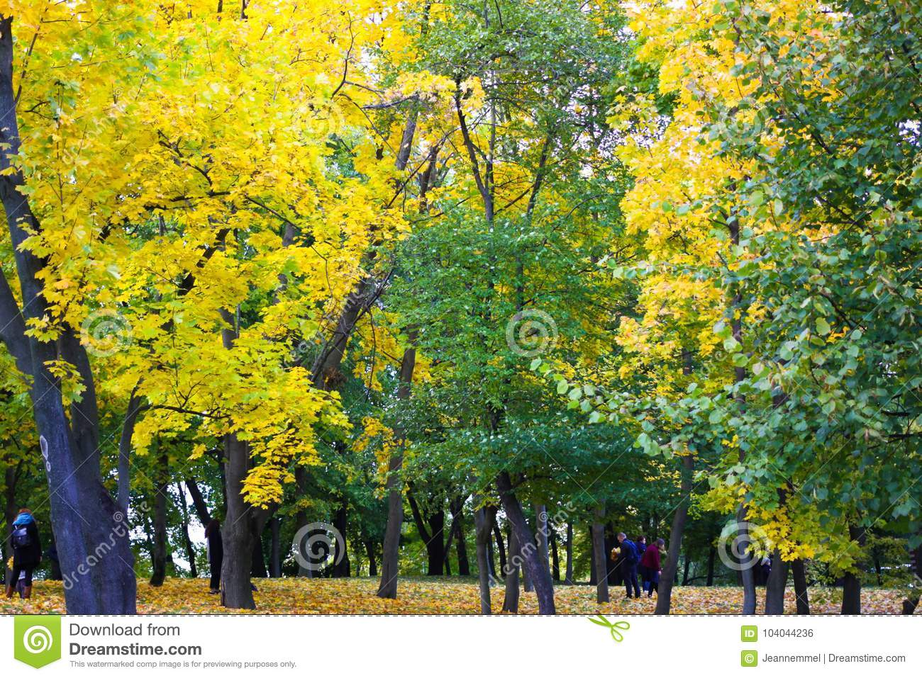 Trees Changing Color From Green To Yellow In The Wood Editorial ...