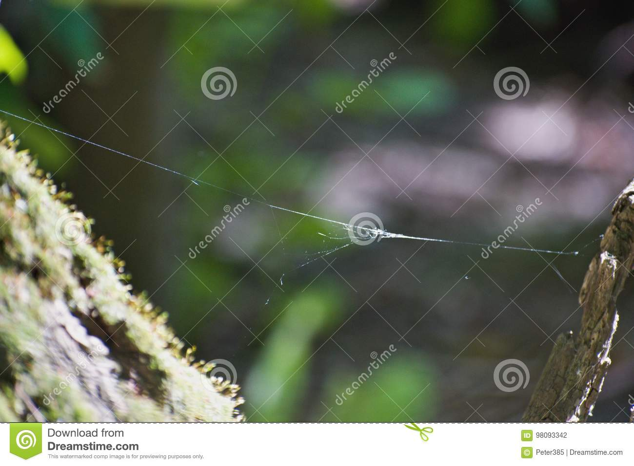 Download Trees - Danube River stock photo. Image of forest, background - 98093342