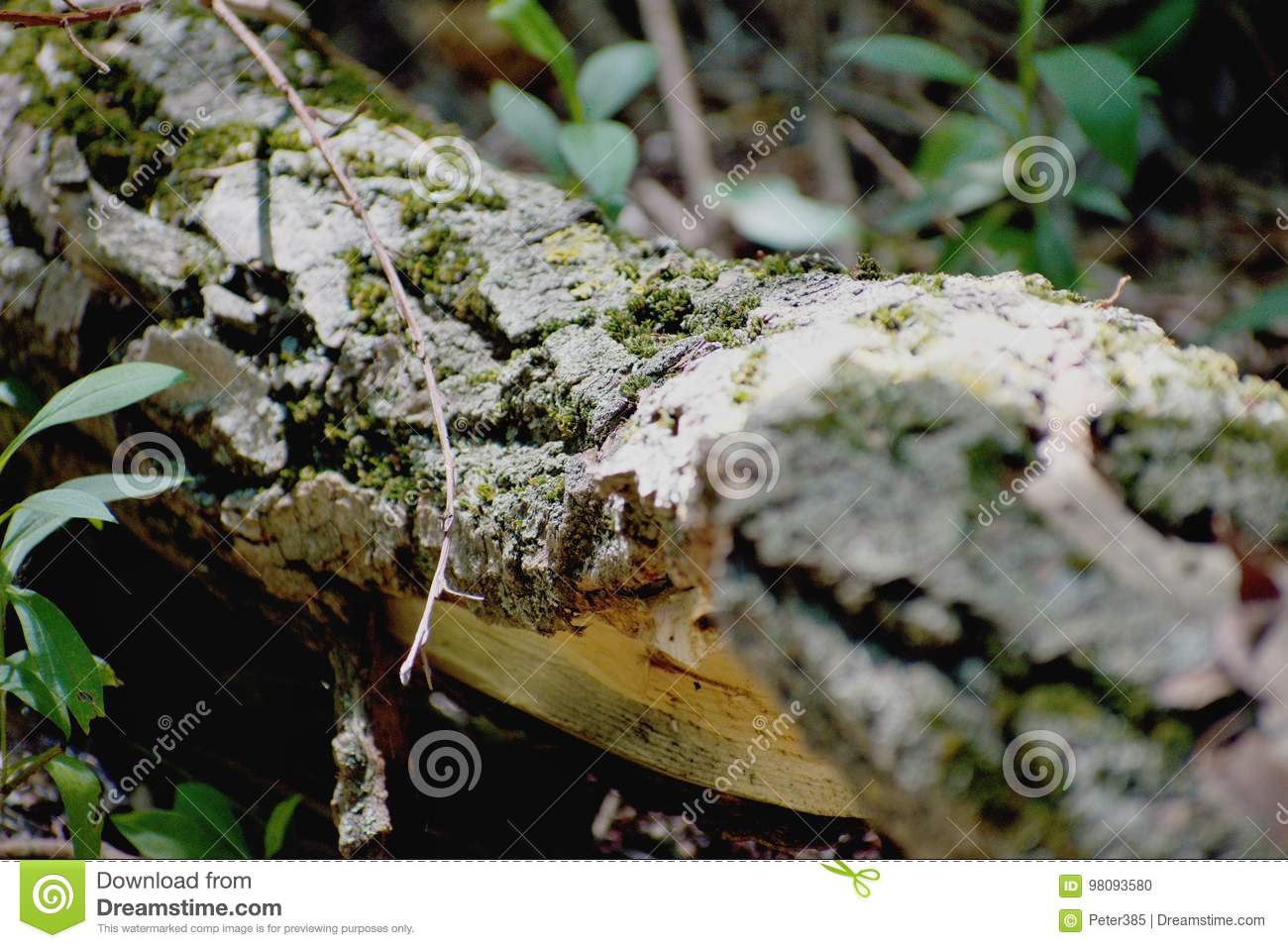 Download Trees - Danube River stock photo. Image of wood, colorful - 98093580