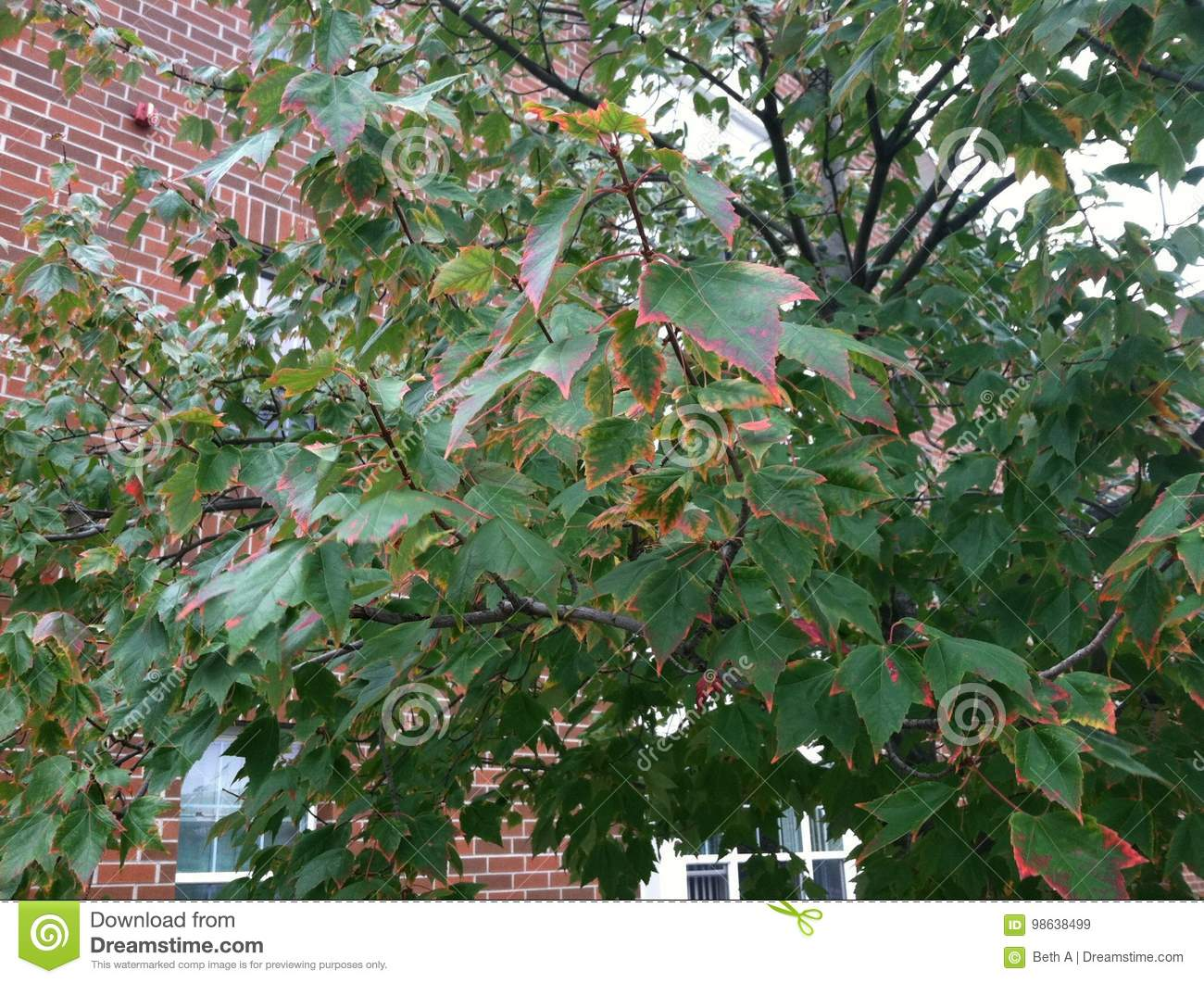 Trees in Early Fall stock image. Image of leaves, deciduous - 98638499