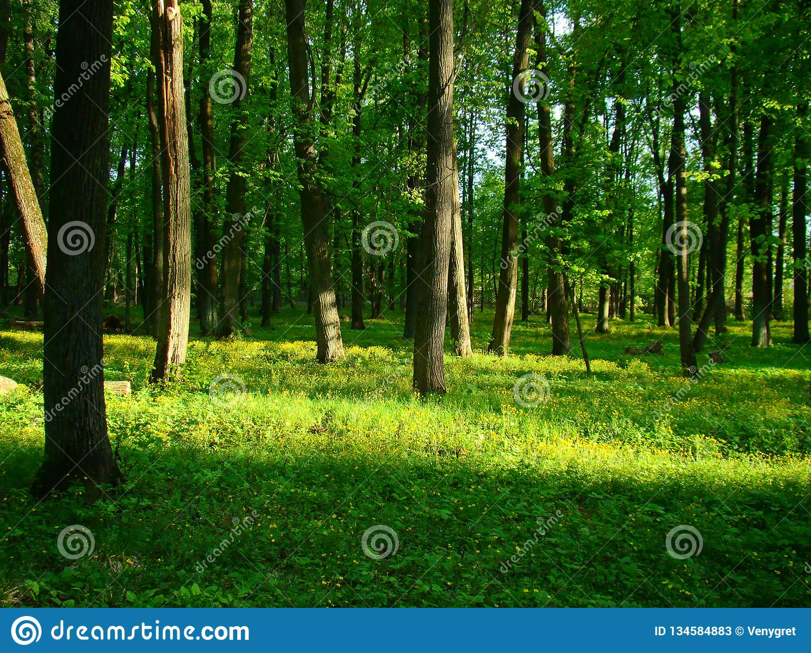 Trees And Flowers In The Sunlit Park Stock Image Image Of Plant