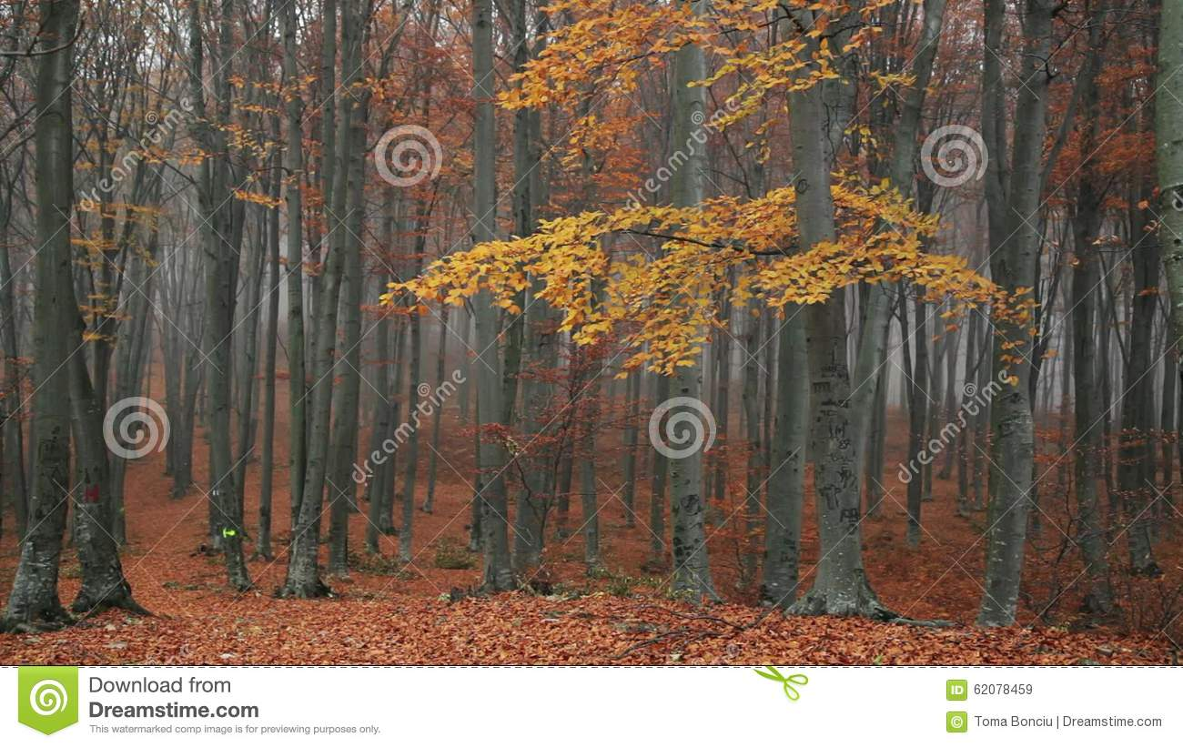 Trees In The Forest With Nature Sounds  Stock Video - Video of misty