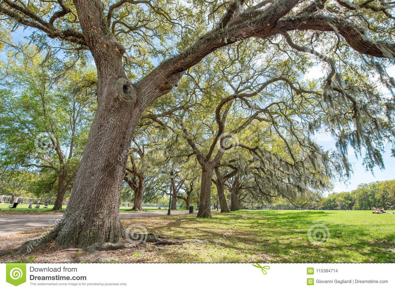 Trees of Forsyth Park in Savannah, Georgia - USA