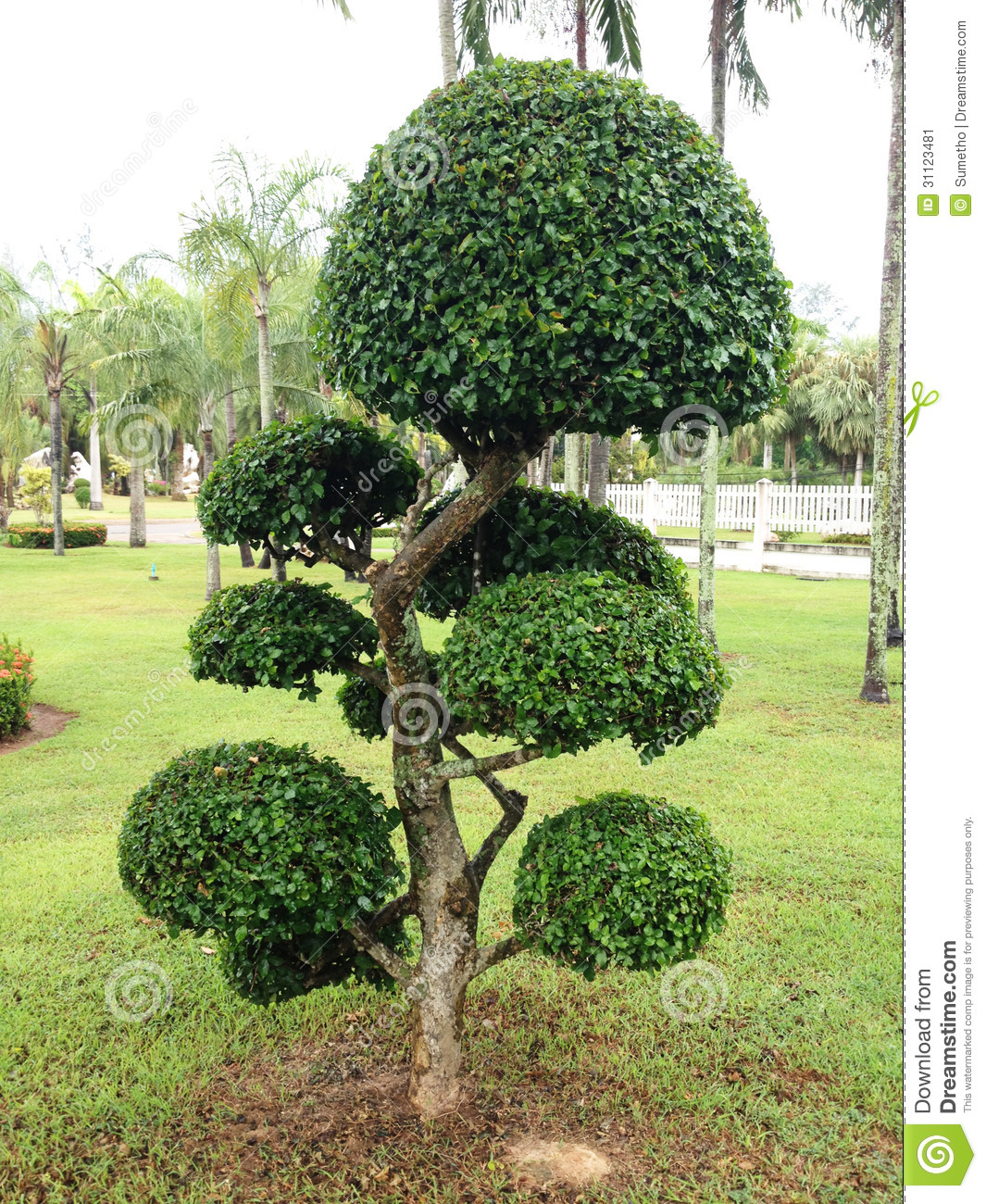 Trees that can be shaped bing images for Garden trees b q
