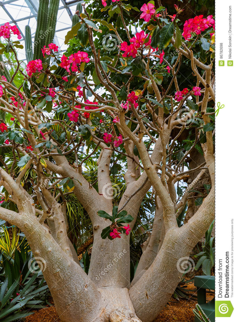 Trees At Gardens By The Bay In Singapore Stock Photo - Image of ...