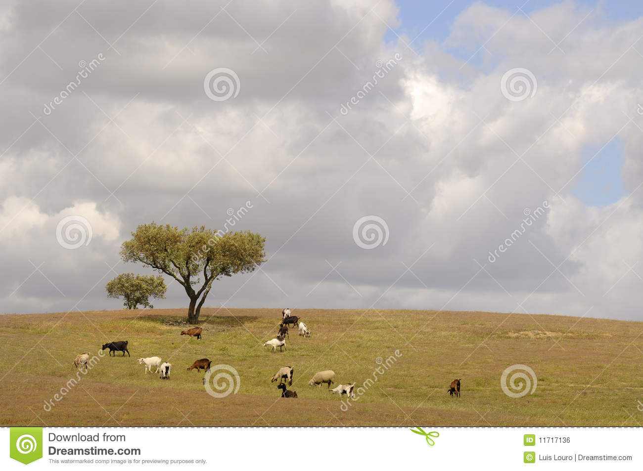 Trees And Goats Stock Photo  Image Of Green  Fresh