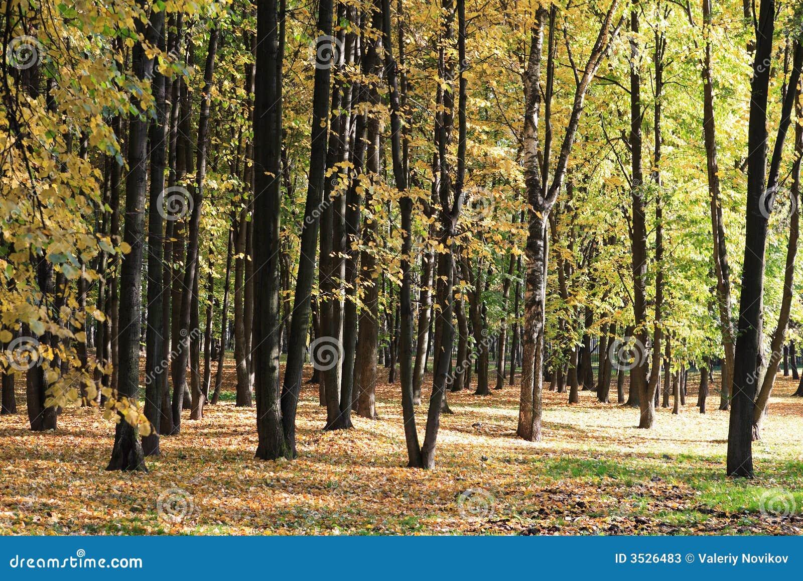 Trees i höst