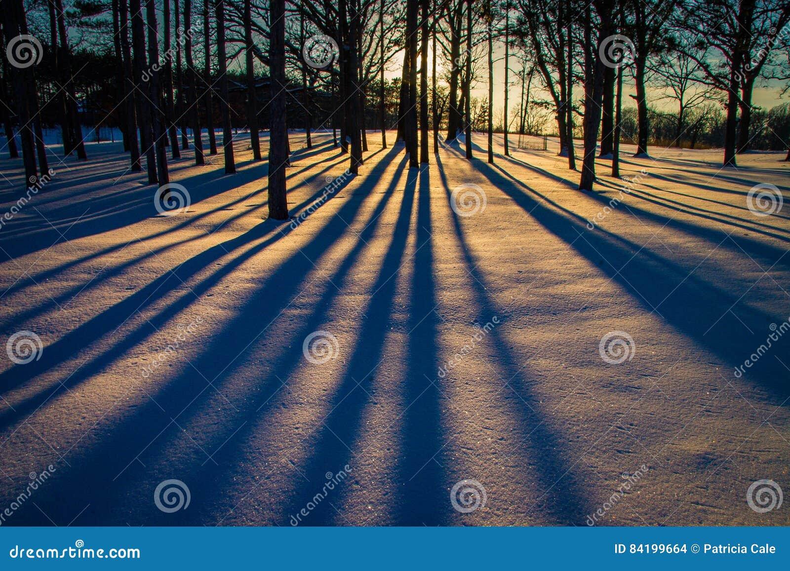 Trees i vinter