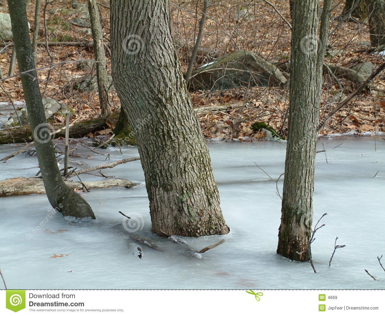 Trees in the ice