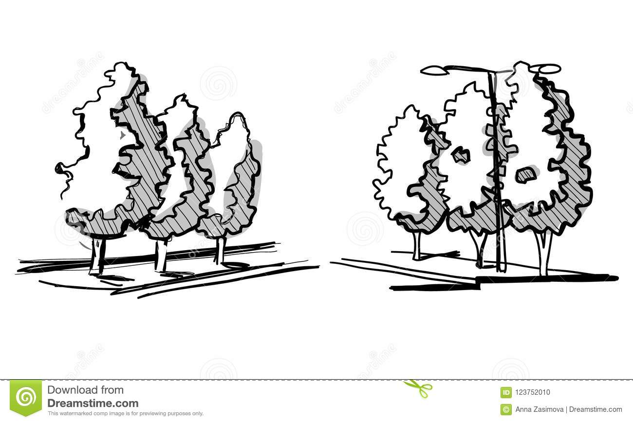Trees for a landscape design different hand drawn trees isolated on white background sketch architectural drawing style trees set top and front view