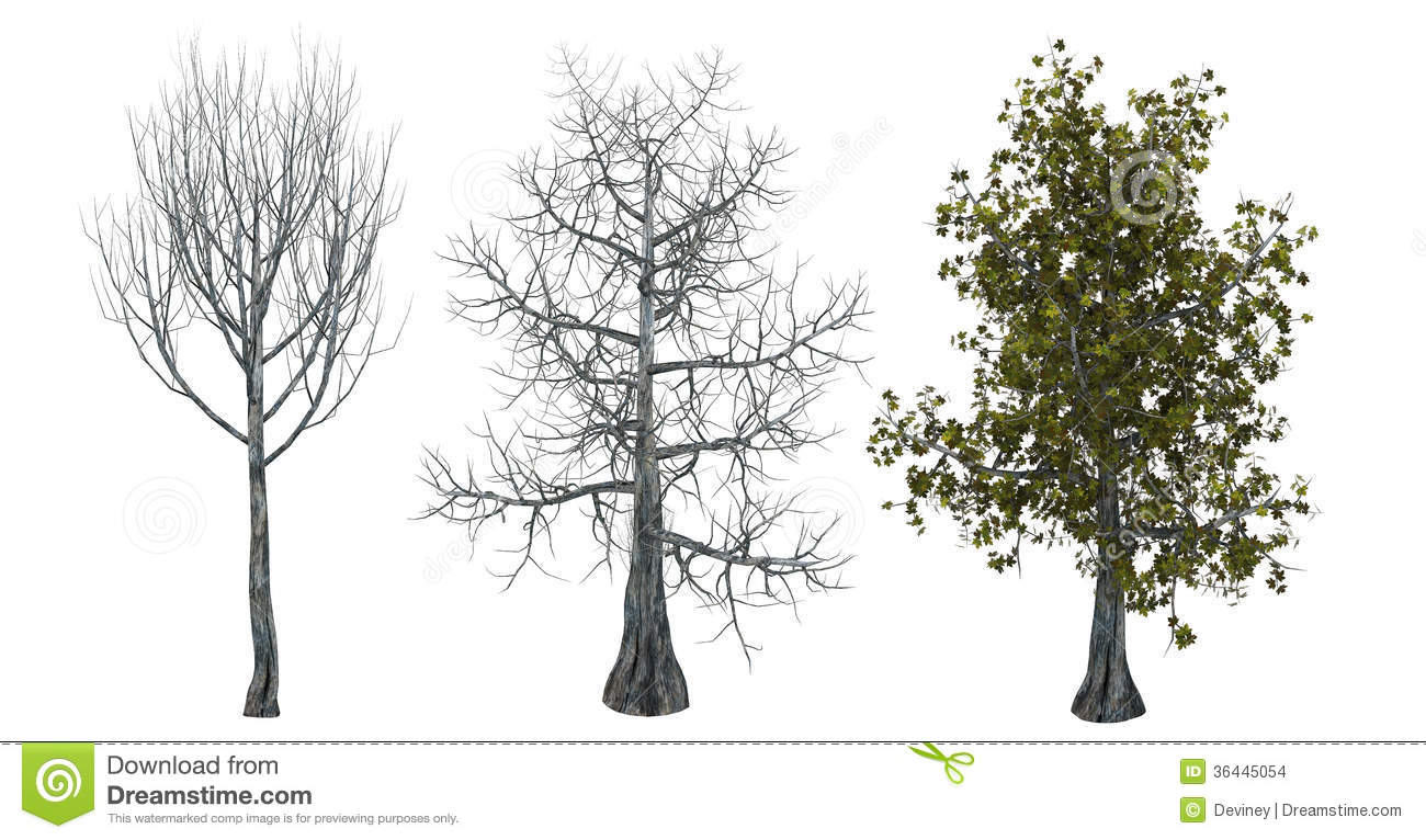 Download Trees With And Without Leaves Stock Illustration - Illustration of defoliated, tree: 36445054