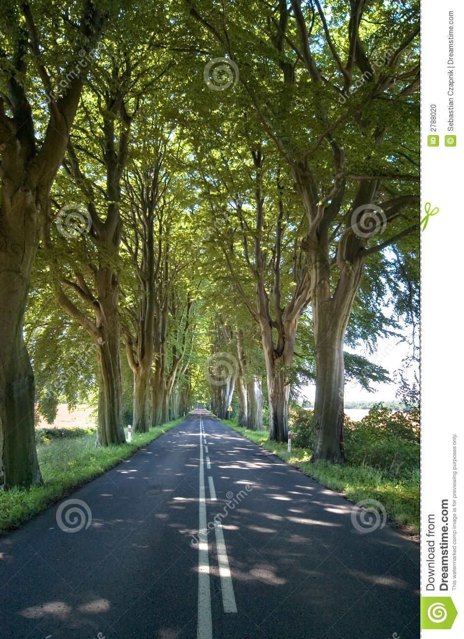 Trees lining straight road stock photo. Image of summer - 2788020 for Straight Road With Trees  49jwn