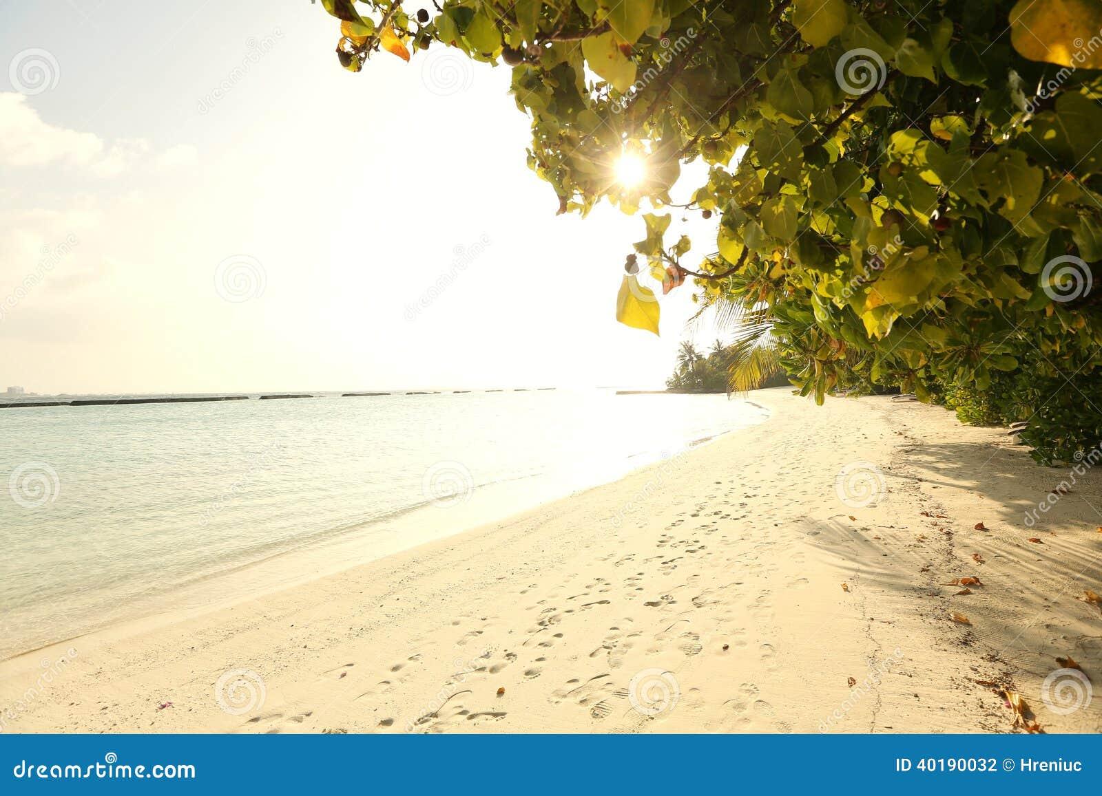Trees in Maldives near sunny beach sand
