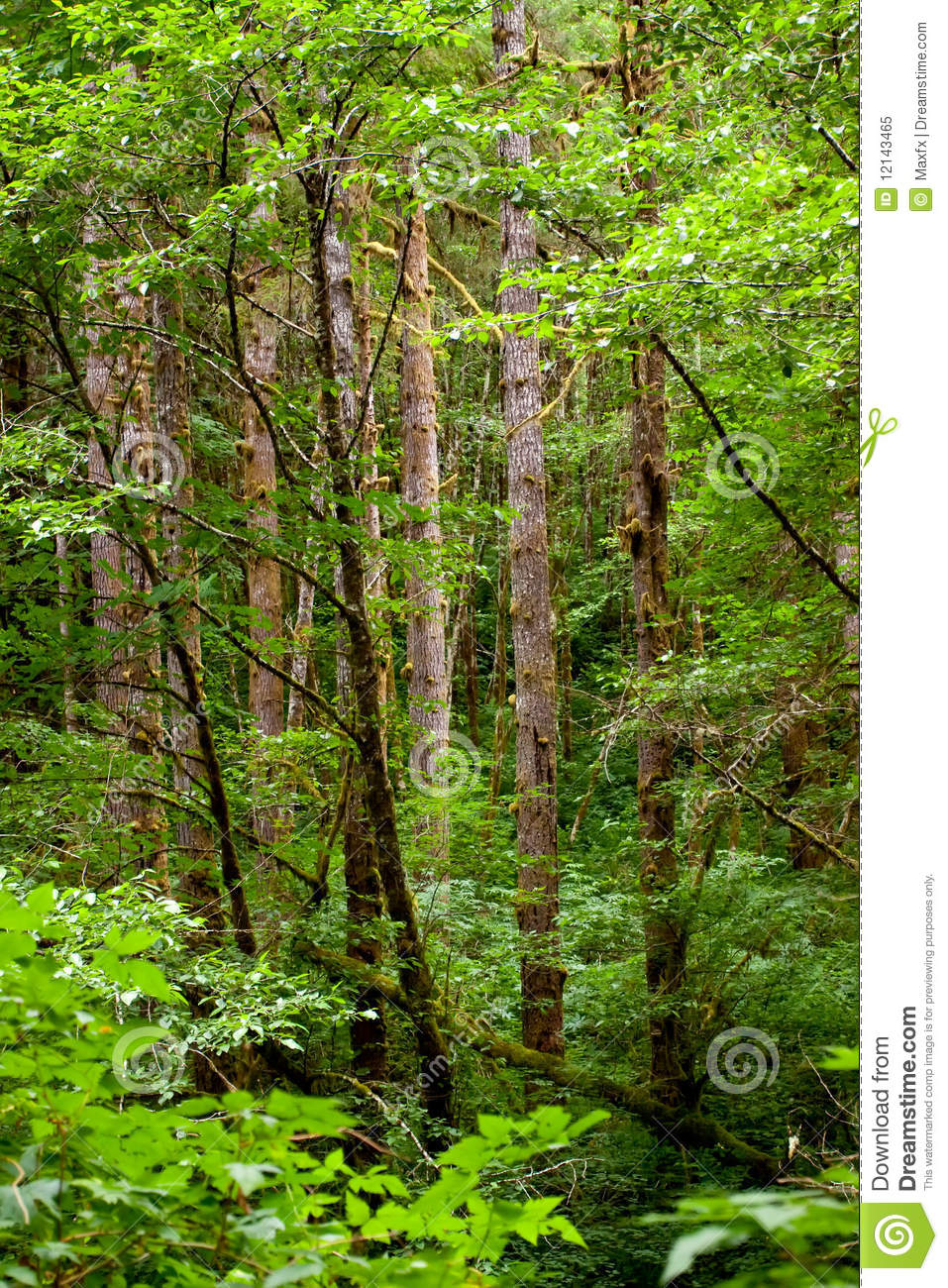Trees With Moss Royalty Free Stock Photo - Image: 12143465
