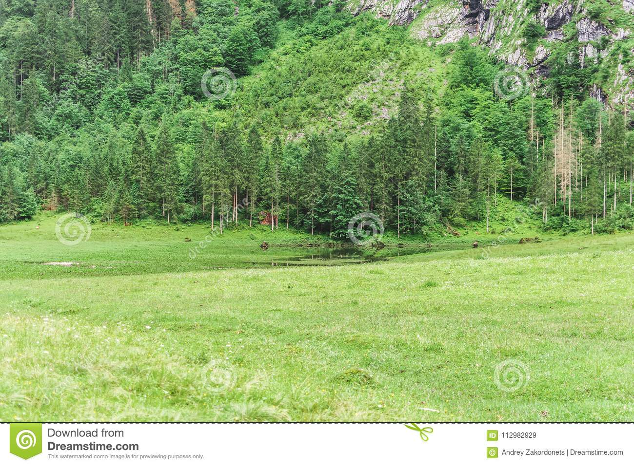 Trees in the mountains, Alps, Germany, Bershtesgaden Obersee.