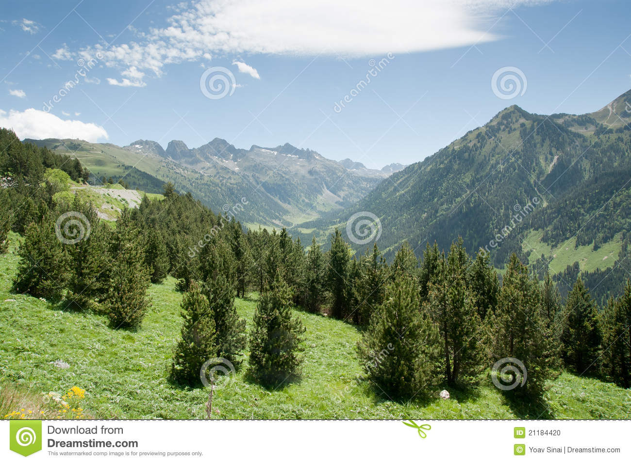 Trees and mountains of spain Pyrenees