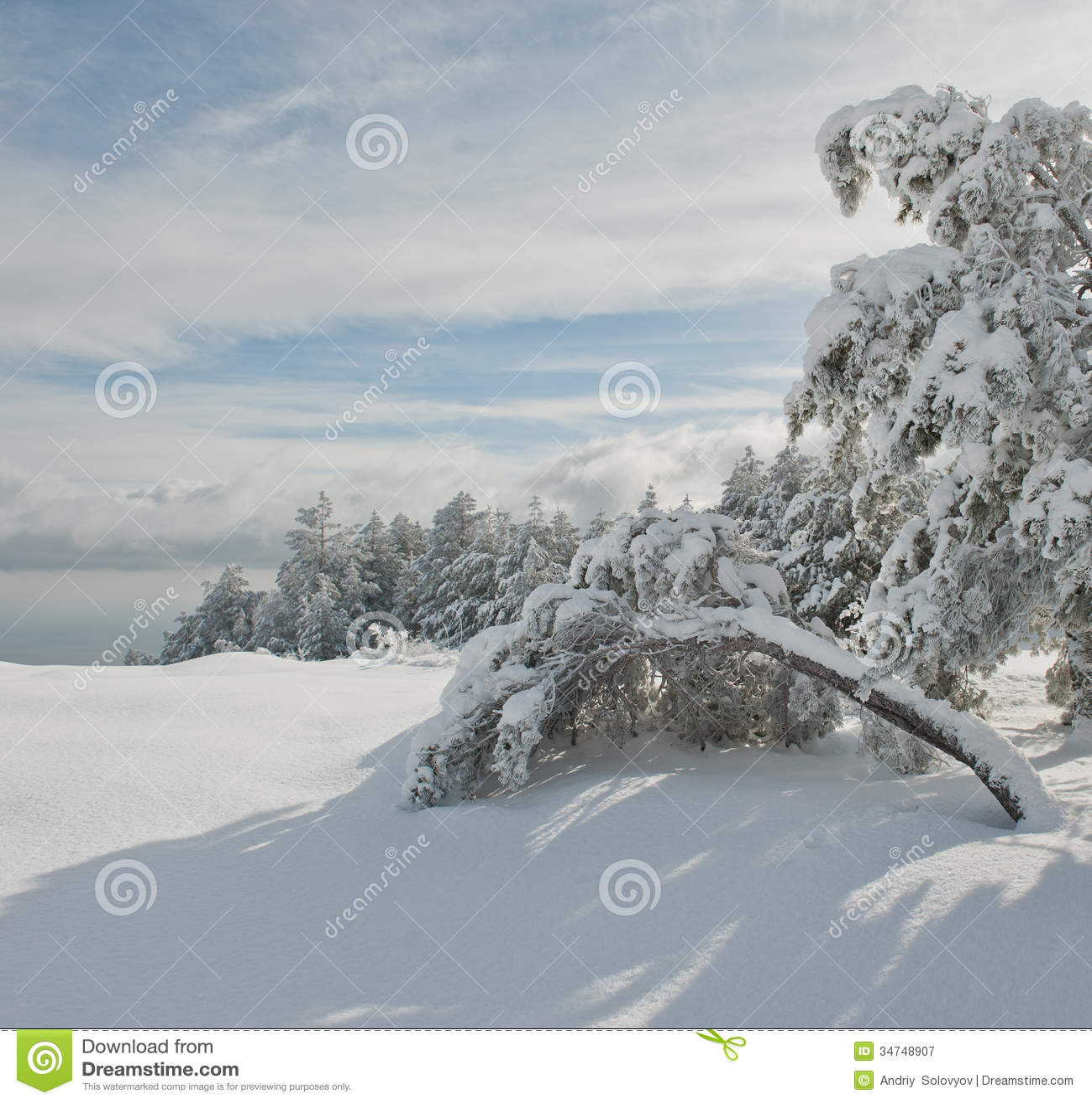 sunny winter day no snow