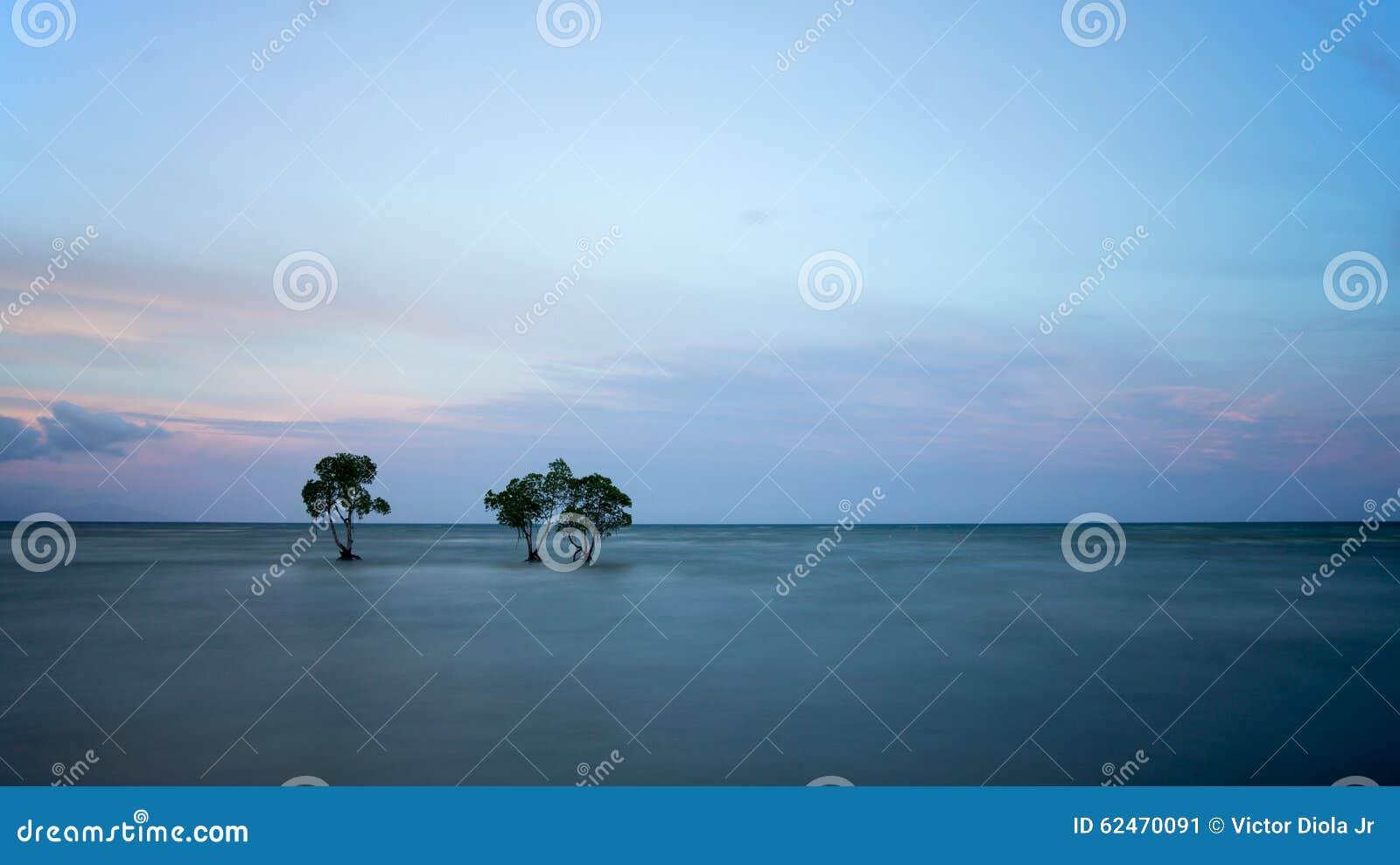 Trees and ocean in long exposure shot