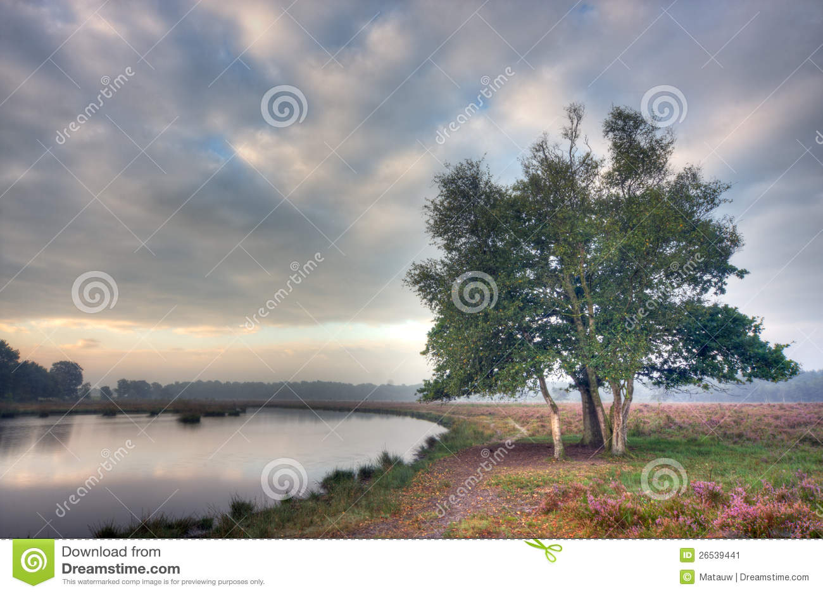 Trees på heath