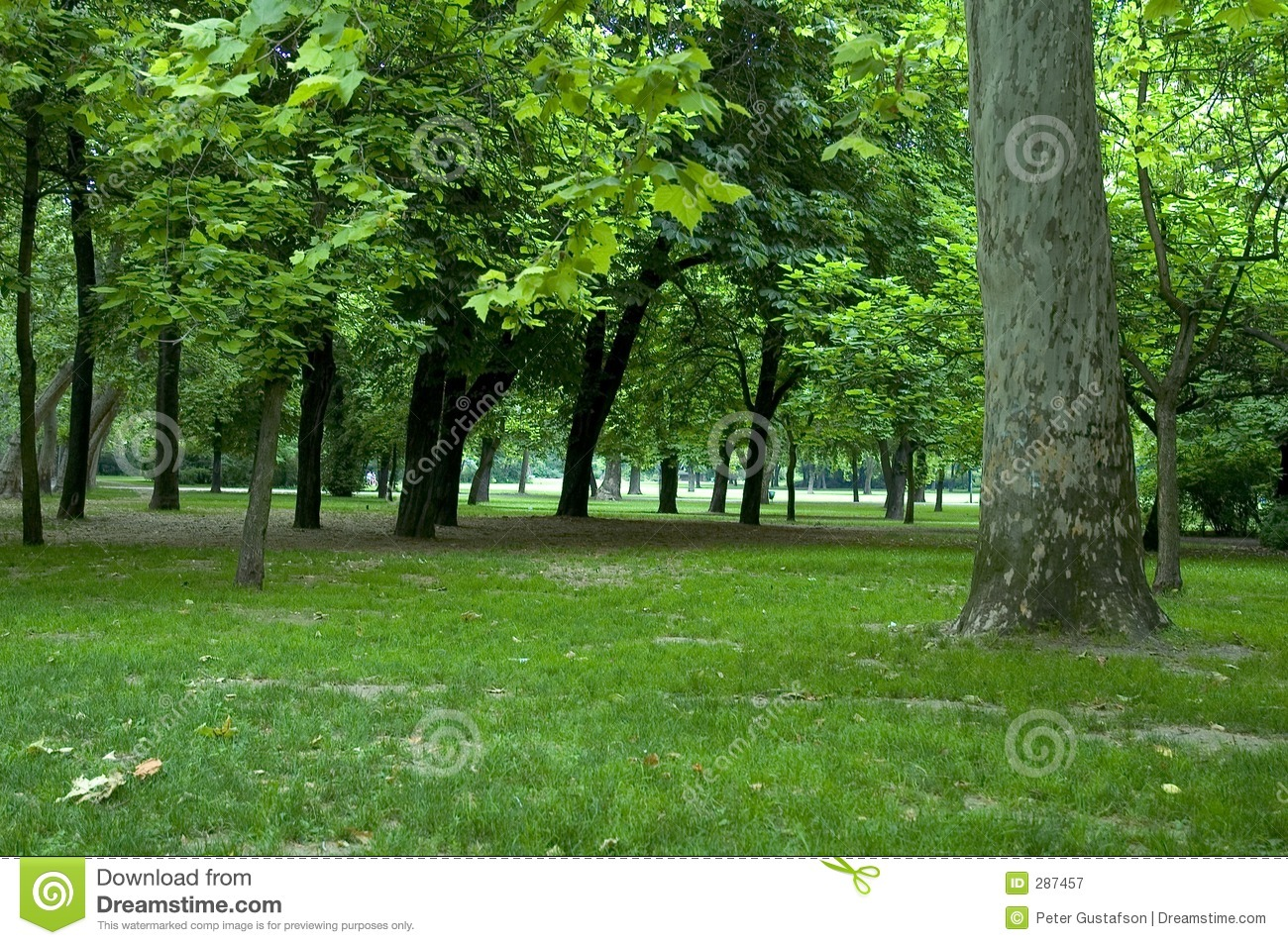 Trees in park 1