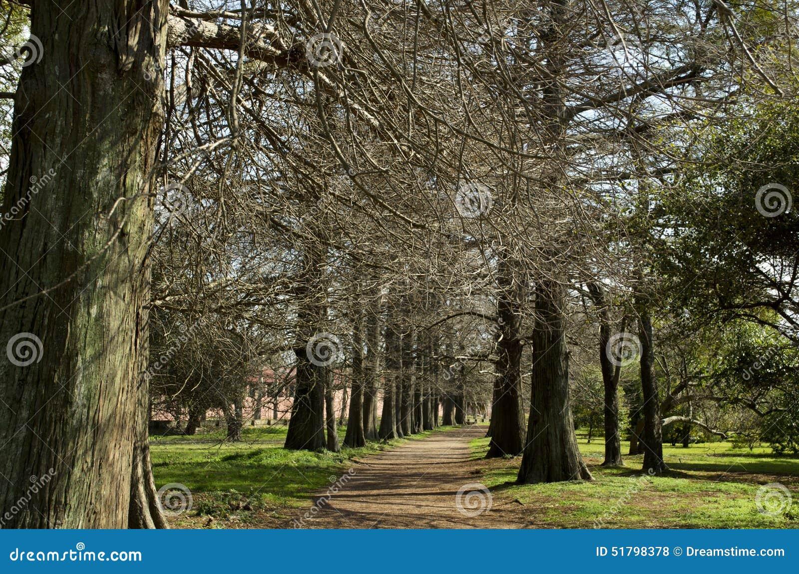Trees Stock Photo Image 51798378