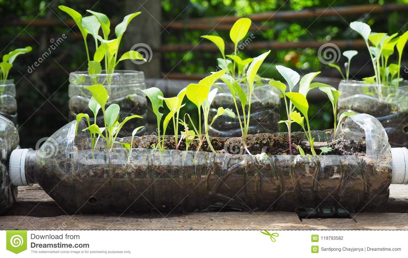 Trees are planted in recycled plastic bottles. Planted in a bottle. Plastic recycle.