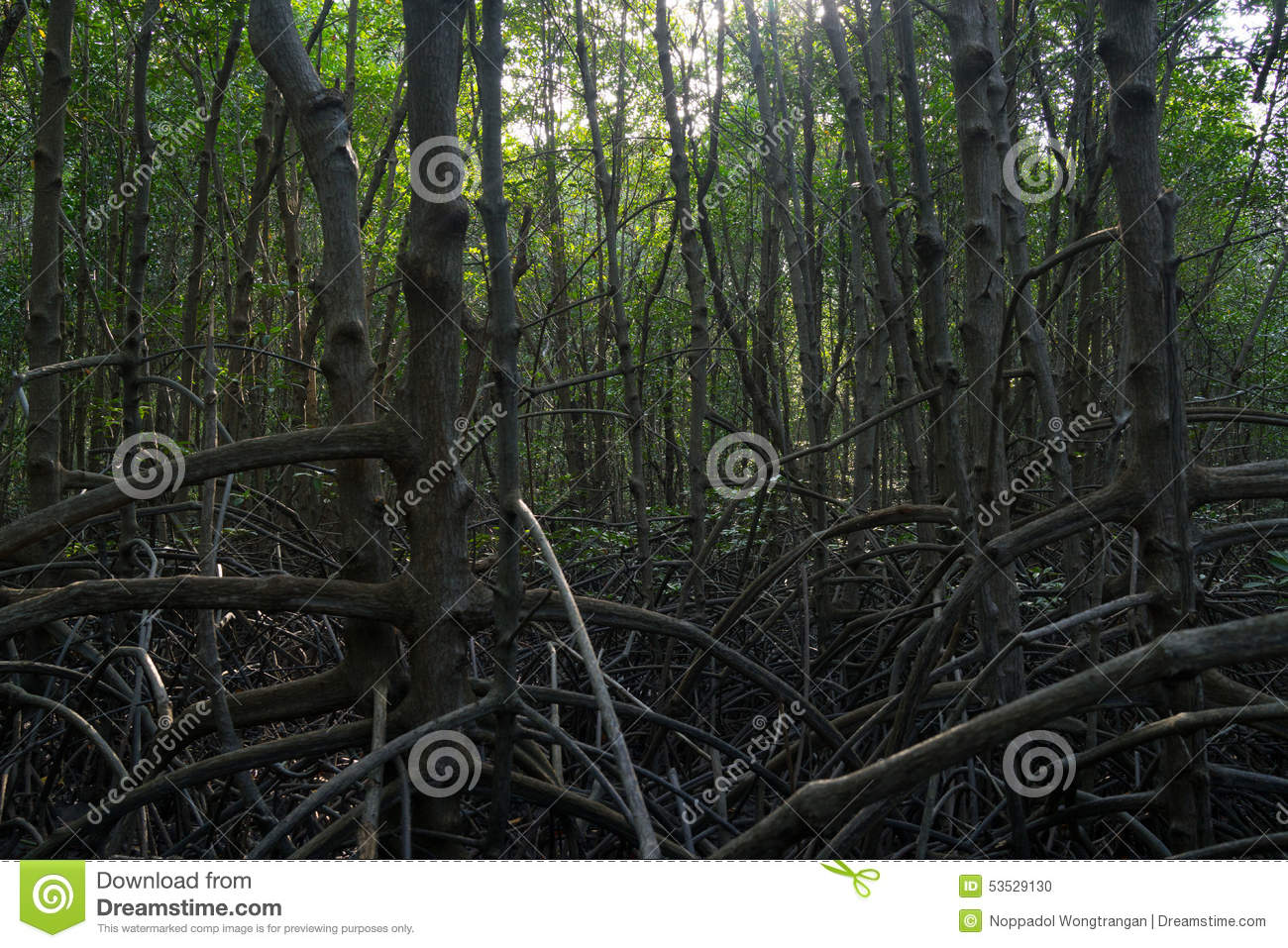 production of pr protein 1 in mangroves leaves A protein-rich powder can be processed from  dried coconut leaves can be  the leftover fiber from coconut oil and coconut milk production, coconut.