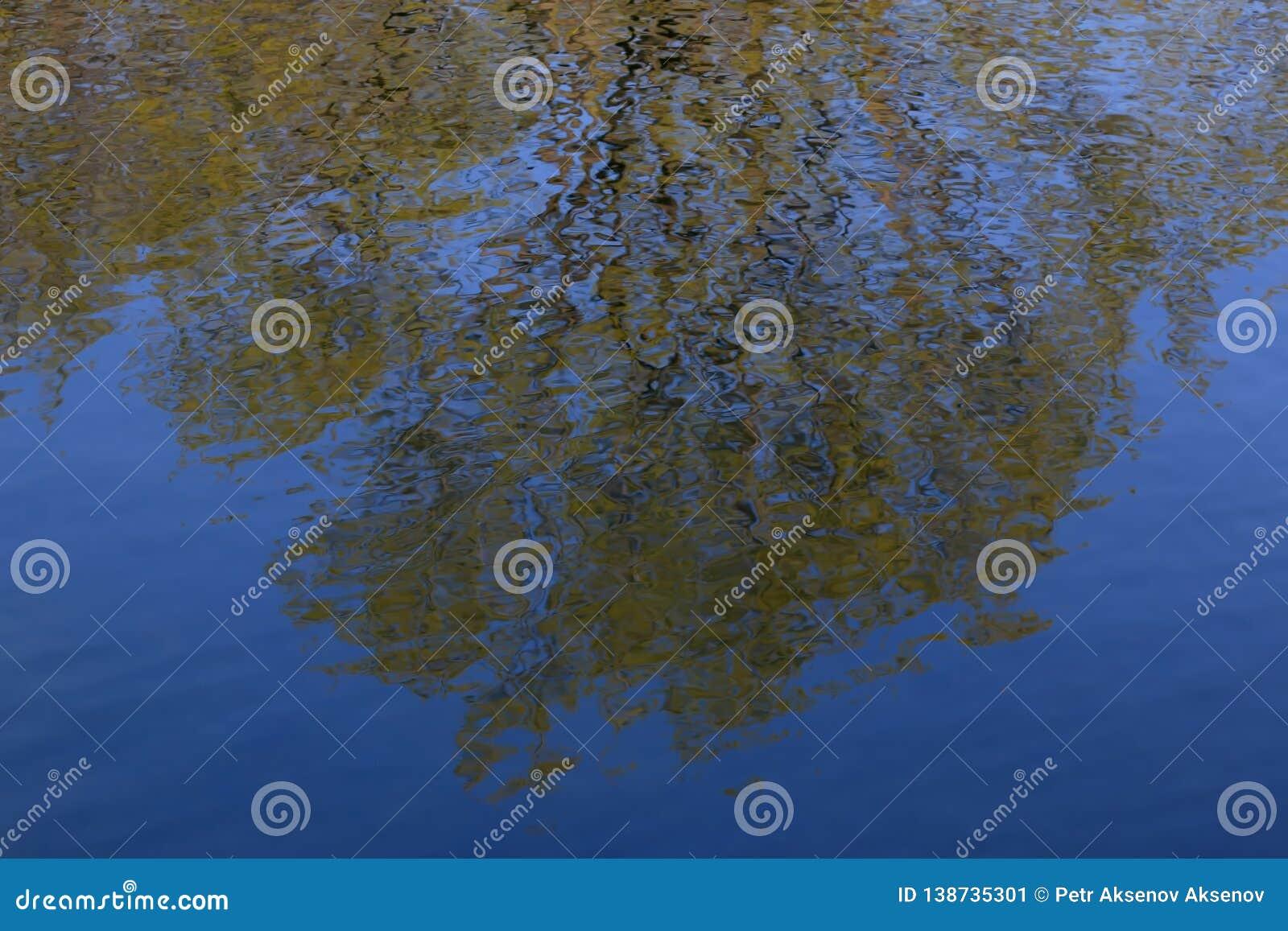 Trees reflekterade i bevattna