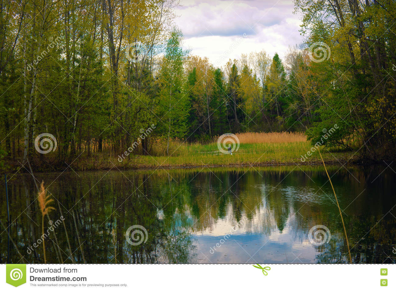 Trees and River