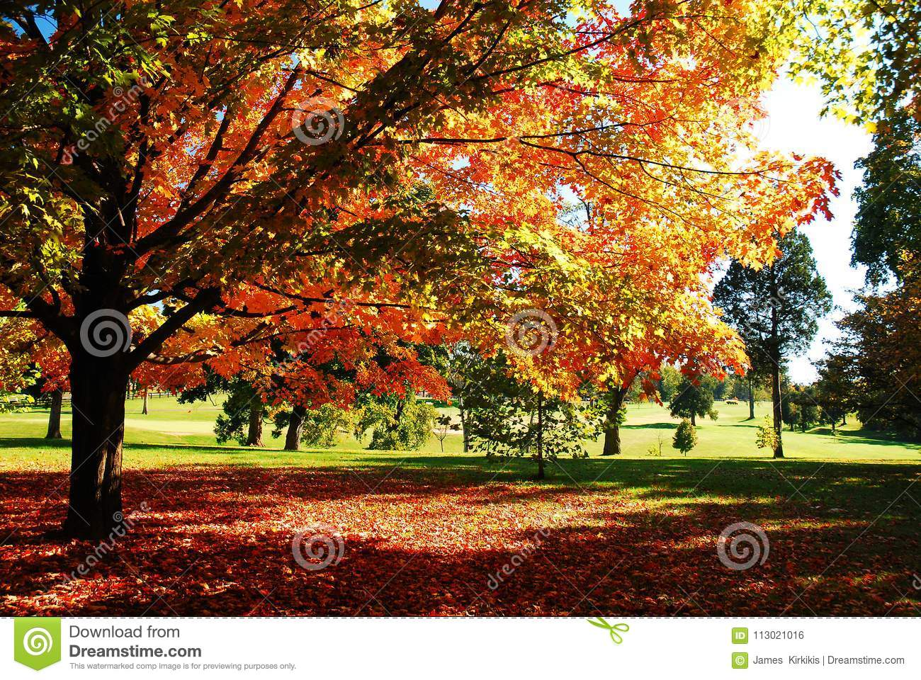 Trees shows a Brilliant Autumn Hue
