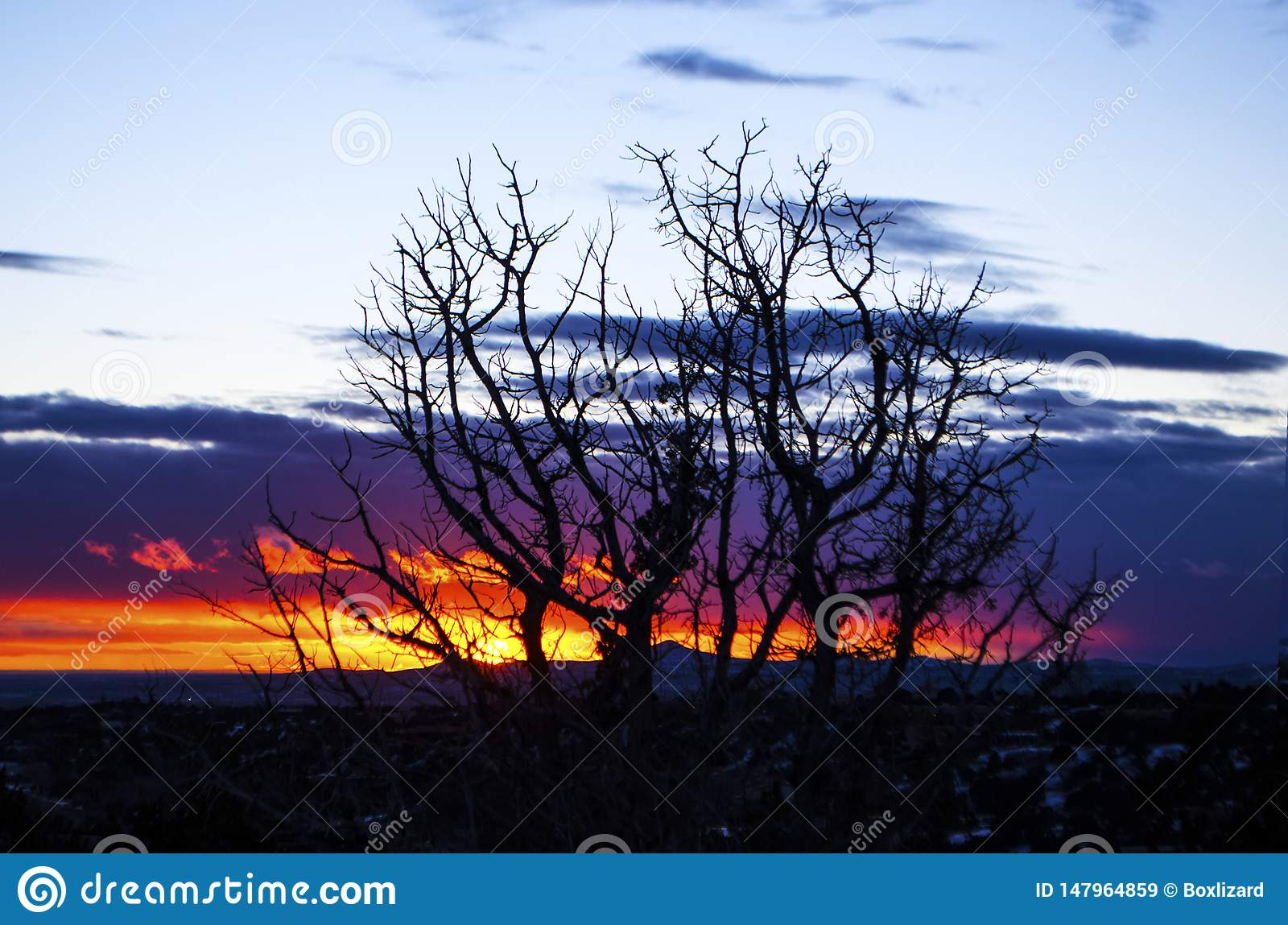 Trees silhouetted against a southwest sunset