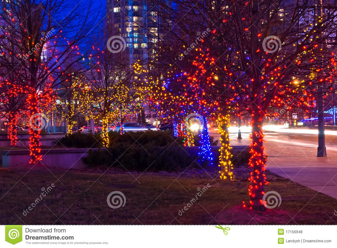 Decorated Christmas Trees With Multicolor Lights