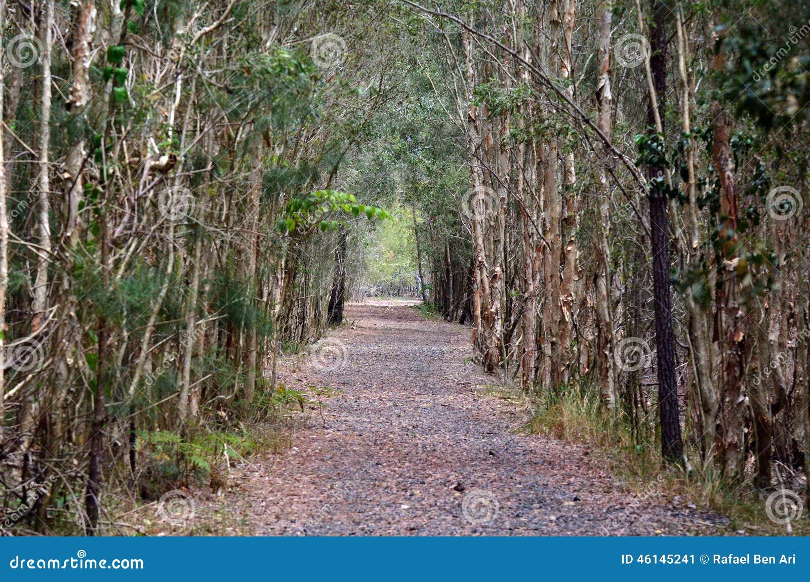 tree path track leaves - photo #23