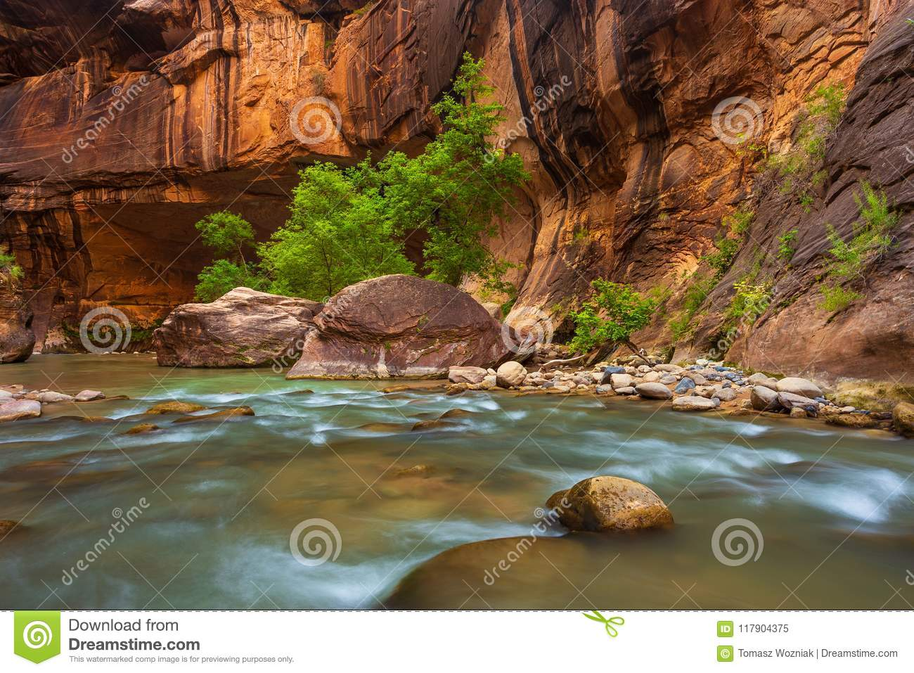 Trees in the Virgin Narrows River in Zion National Park.