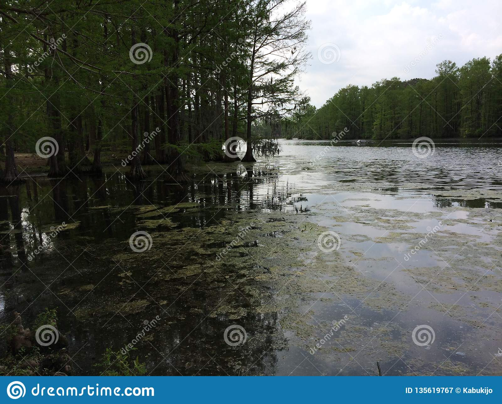 Trees in water and mud