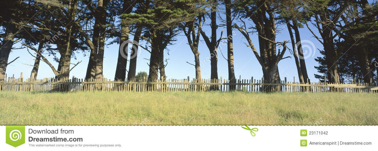 Trees and wooden fence,