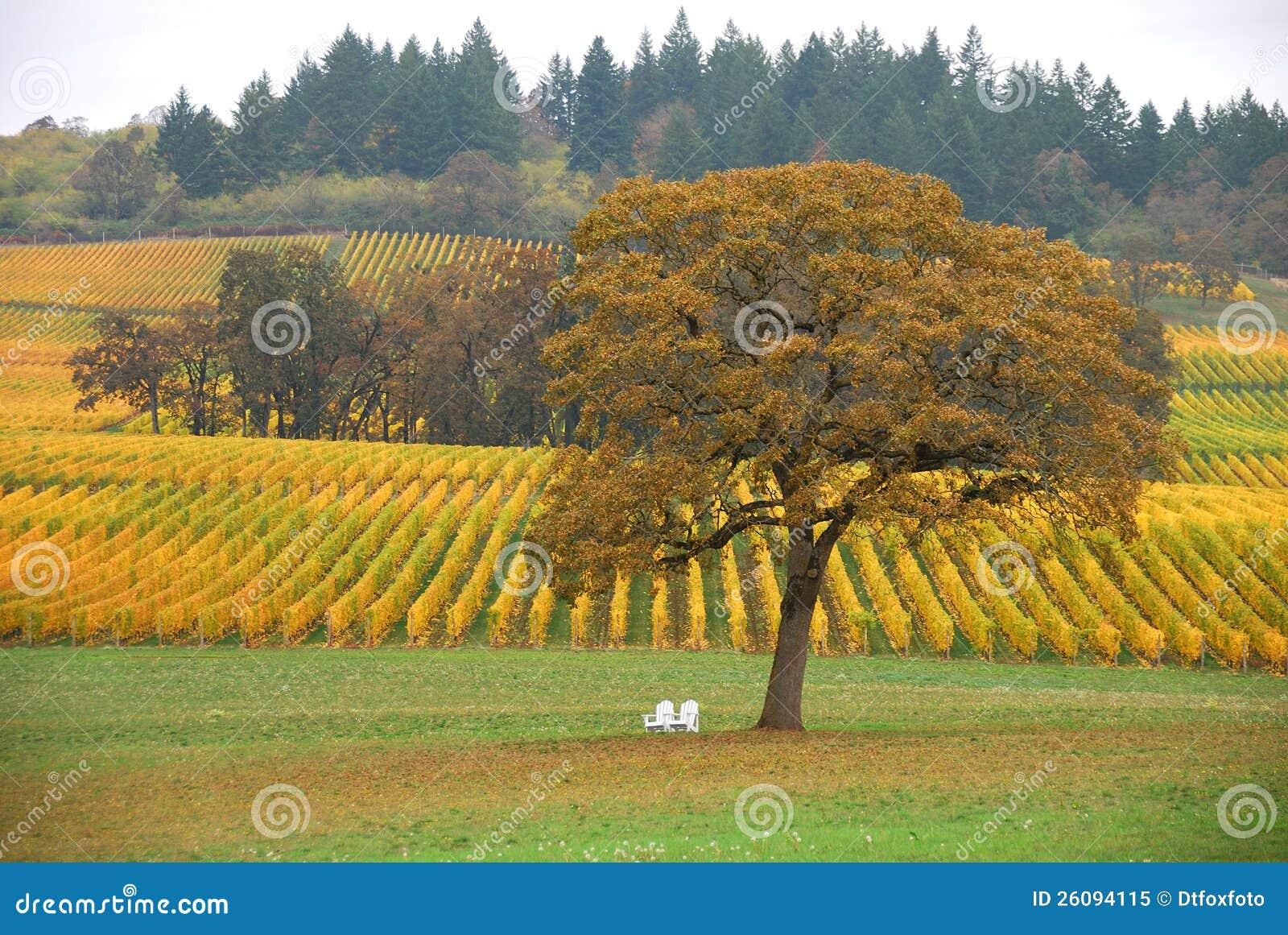 TreeVineyard