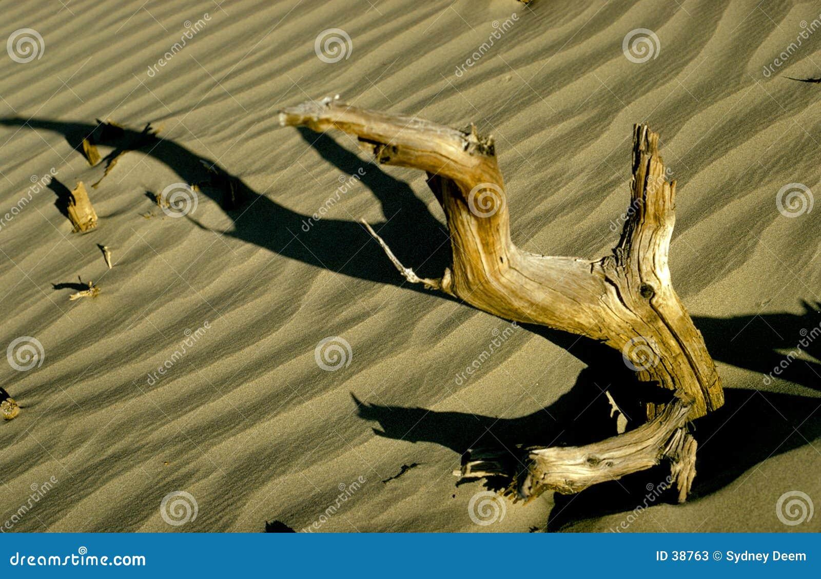 Download Treibholz stockbild. Bild von sand, holz, wüste, zweig, baum - 38763