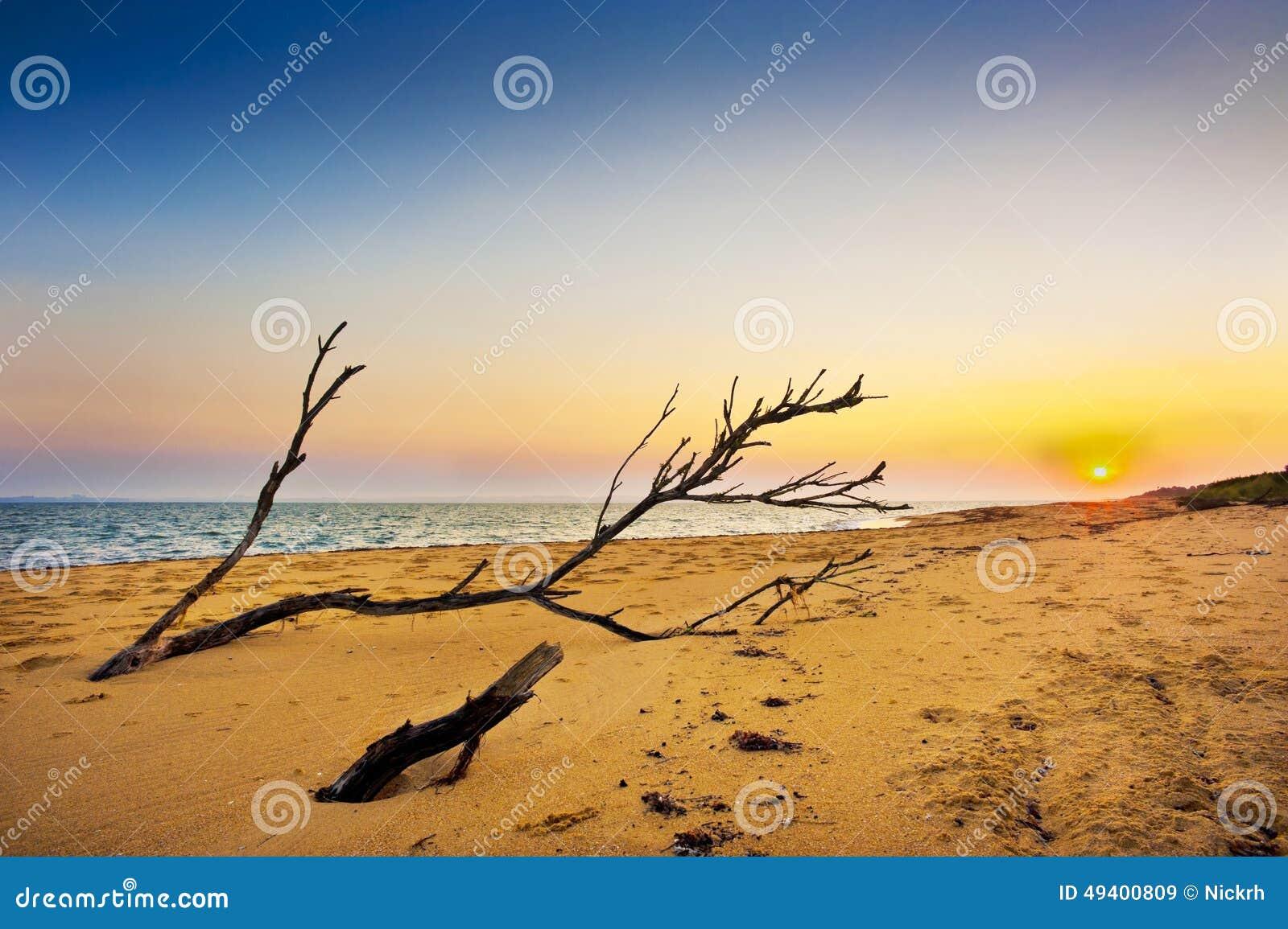 Download Treibholz stockbild. Bild von malerisch, verlassen, dämmerung - 49400809