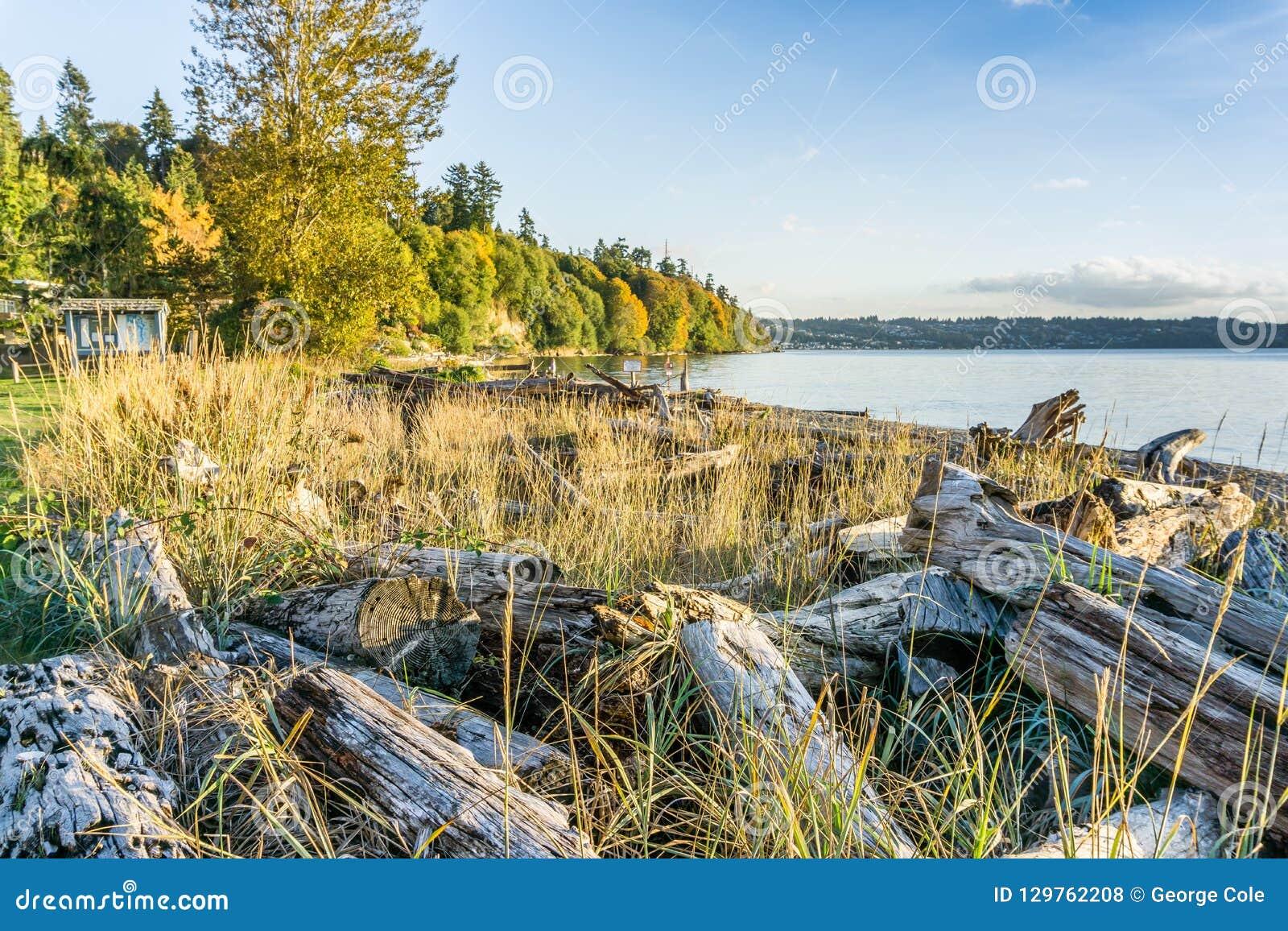Treibholz Autumn Shoreline 3