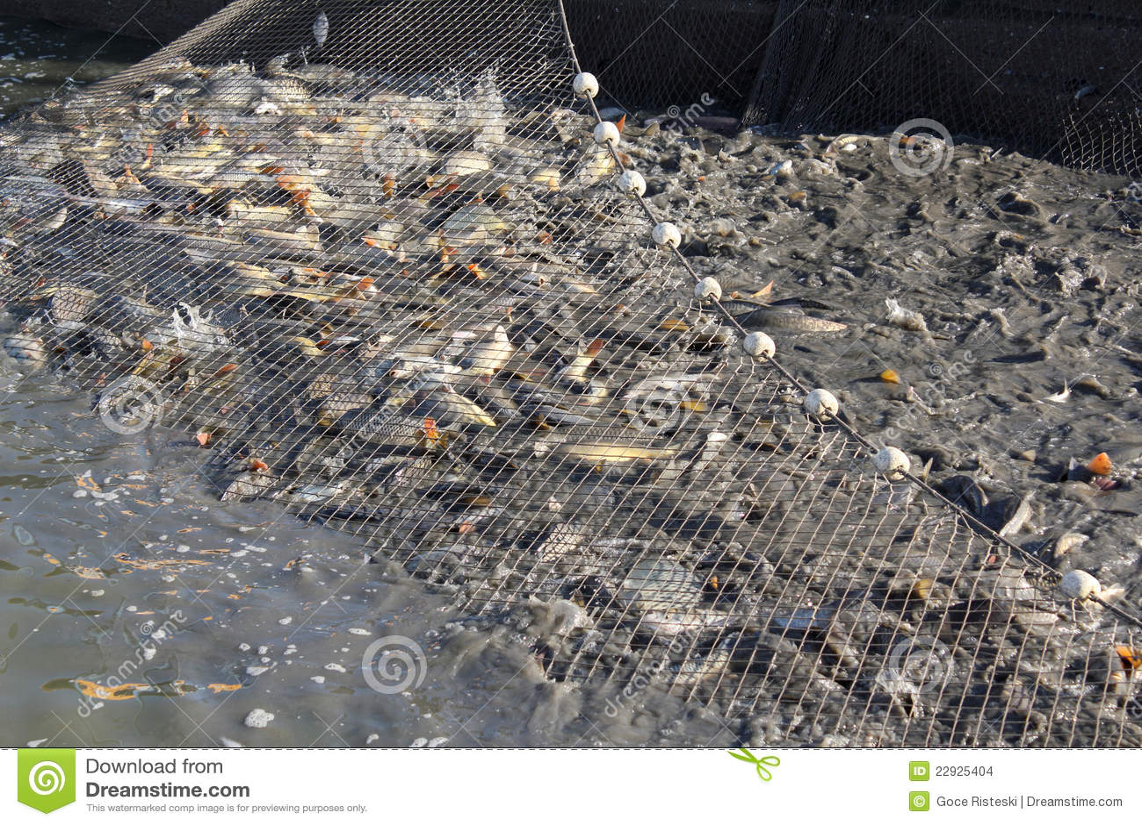 Treibnetz mit fischen stockfoto bild von teich gesch ft for Teich mit fischen
