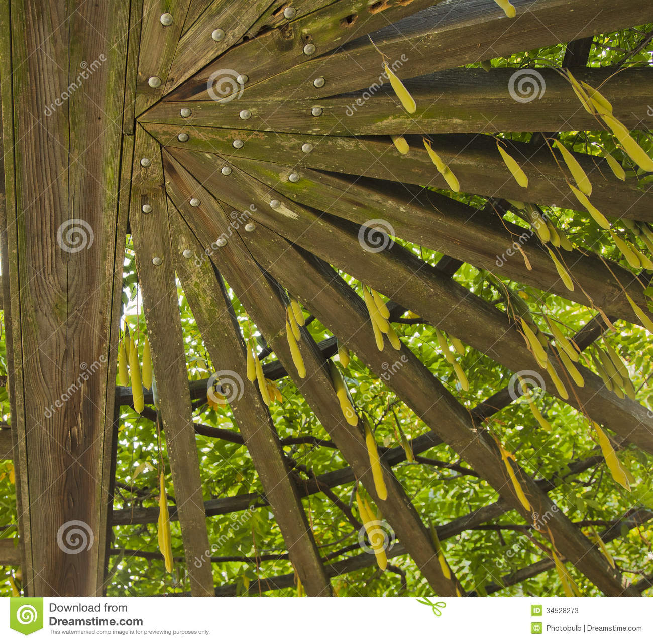 Treillis de jardin photos stock image 34528273 for Treillis jardin