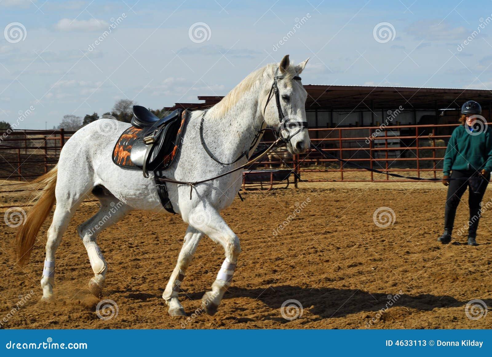 Treinamento do cavalo