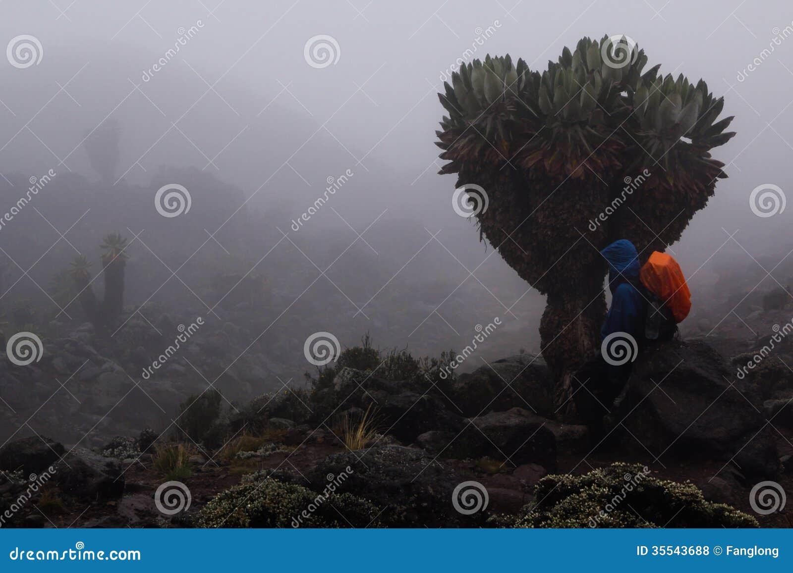 Trekker in Kilimanjaro